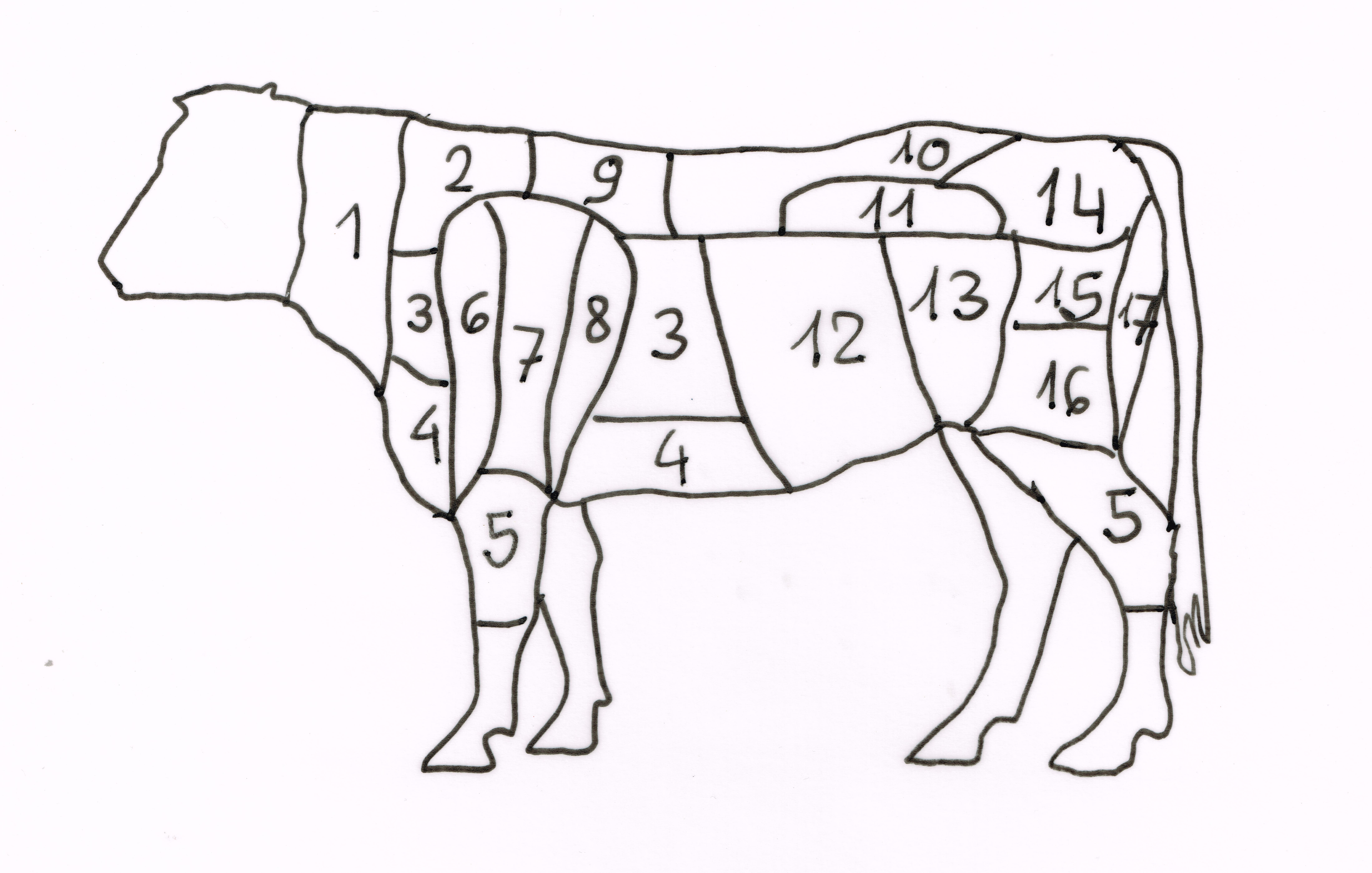 Bezeichnung der Körperteile eines Rind